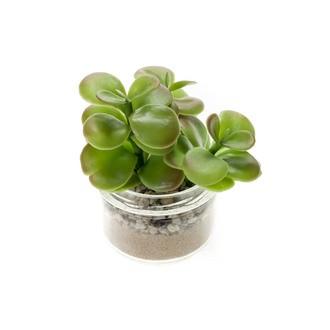 Succulente en pot verre 8,2x6,4cm