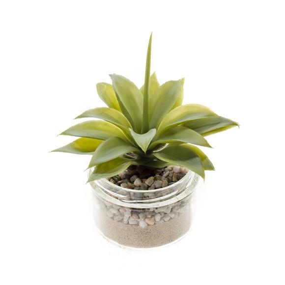 Succulente en pot verre 8,2x6,4cm vert