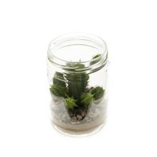 Achat en ligne Cactus en pot verre 8,2x12,7cm