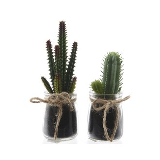 Cactus pot en verre