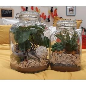Créer mon terrarium dans un grand bocal