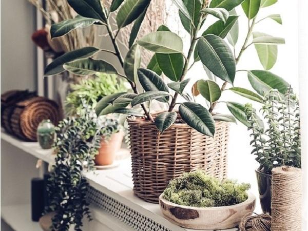 Ma décoration jardin d 'hiver